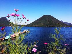 コスモスと榛名湖の情景