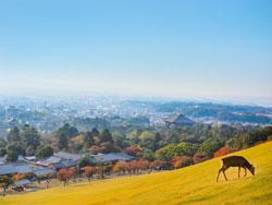 奈良県の若草山